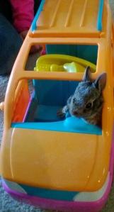 ae78a-bunnybeepbeep