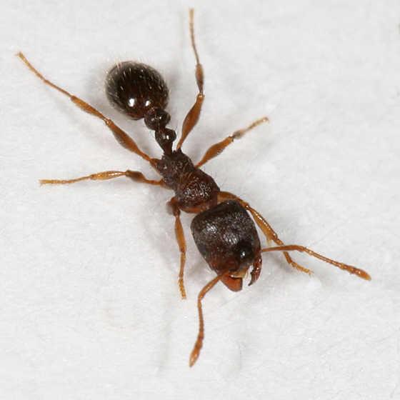 https://wedontchewglass.files.wordpress.com/2014/06/ant-pavement.jpg