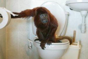 "Please never search for ""monkey on a toilet.""  You're welcome."